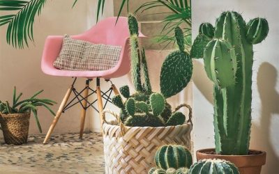 Jungle Home – i colori per una giungla in casa